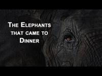 The Elephants that came to dinner | Mfuwe Lodge, Zambia