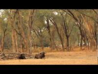 Zambezi Magic - Baines River Camp